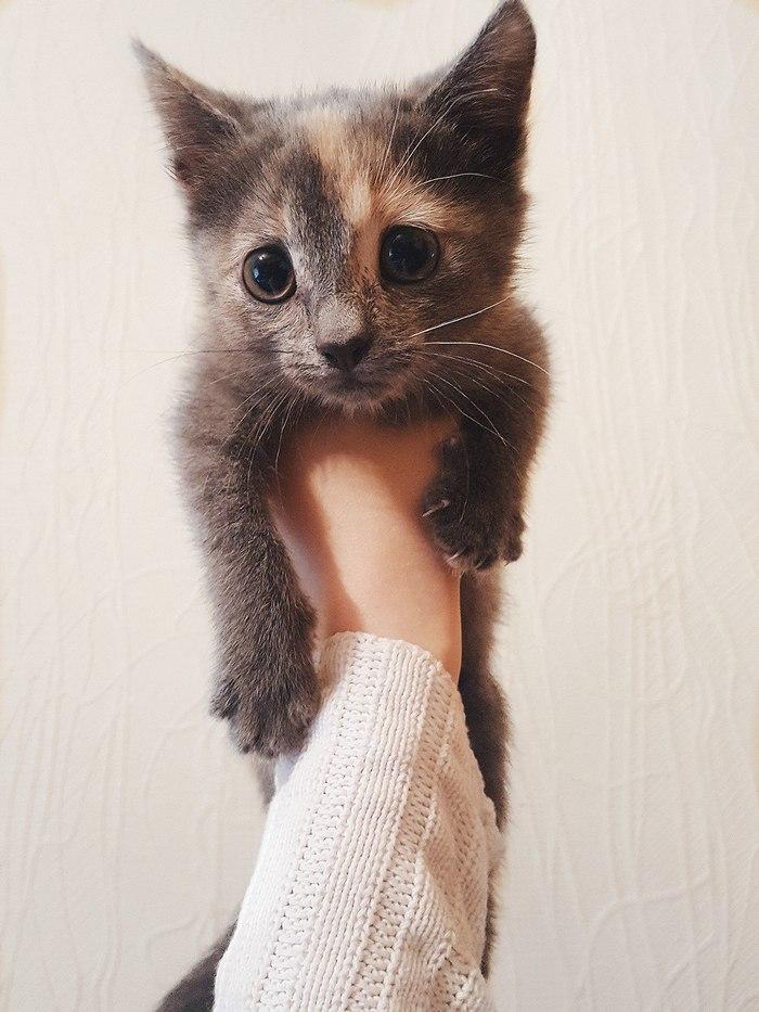 Могилев! Котята в добрые руки! Могилев, Котята, В добрые руки, Длиннопост, Кот