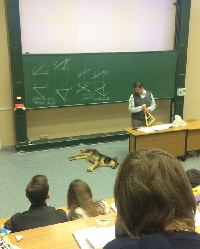 Собакен на паре МГТУ им Баумана, Собака, Начертательная геометрия, Пара, Милота