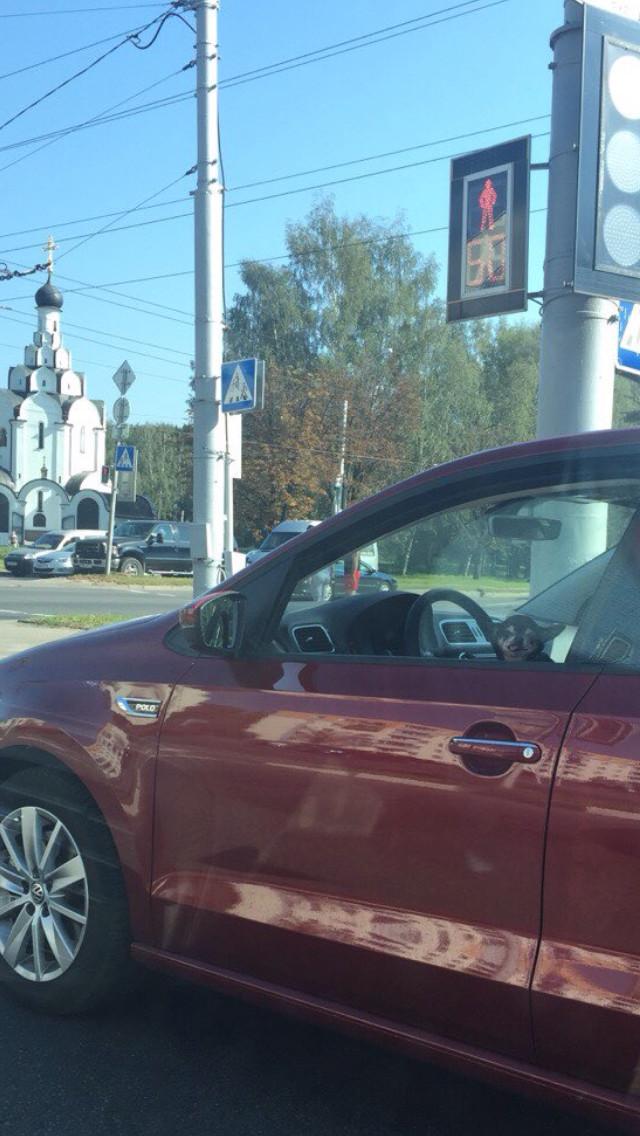 Когда тачка перед тобой тупит и смотришь на светофоре кто за рулём Моё, Минск, Водитель, Собака, Длиннопост