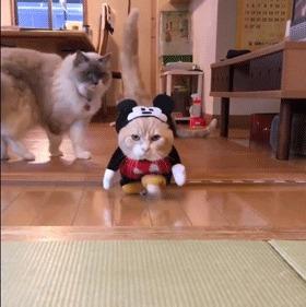 Че ты там сказал про мою шапочку?!