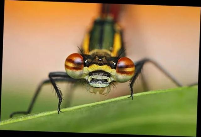 Может ли насекомые попасть через глаз внутрь