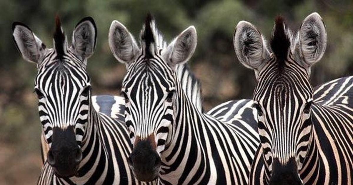 Черно-белая или бело-черная?