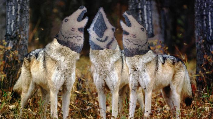 Волки Тату, Волк, Лига любителей татуировки, Страдания, Вой