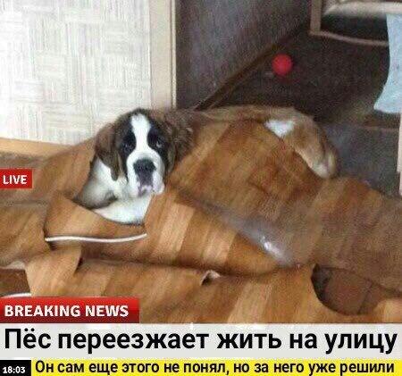Срочные новости.