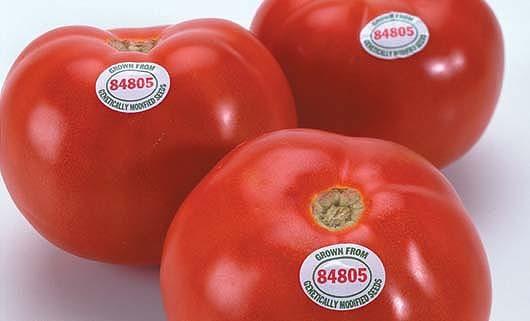 Про трансгенный помидор, томатную пасту и про то, почему всё это пропало из магазинов ГМО, Помидоры, Генная инженерия, Flavr savr, Длиннопост