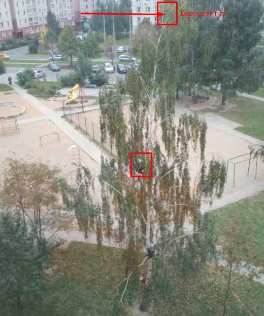 Девочка на берёзе высотой 15 метров... Дети, Опасность, Минск, Беларусь