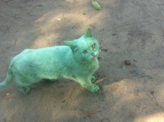 Вот такую кошку можно встретить в Липецке Кот, Зеленка, Ублюдки