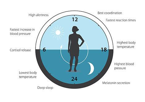 Нобелевская премия по физиологии и медицине 2017 года: молекулярный механизм биологических часов Циркадный, Ритмвнутренние, Часыбиологические, Часы, Гормоны, Метаболизм, Geektimes, Длиннопост