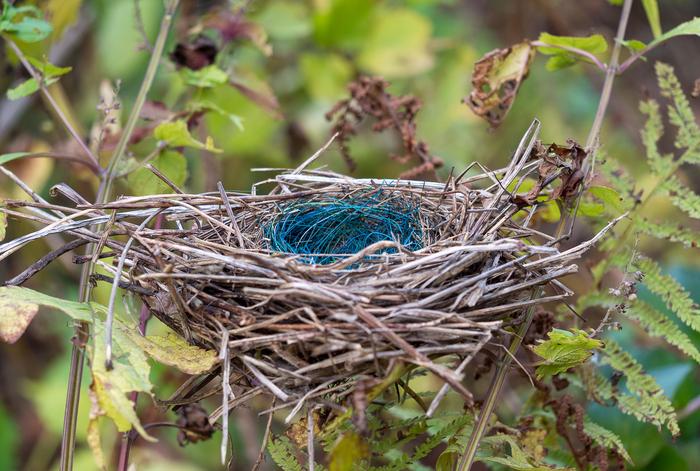 Вот такое гнездо Гнездо, Креатив, Необычное гнездо