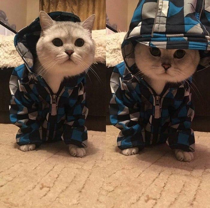 К холодам готов)
