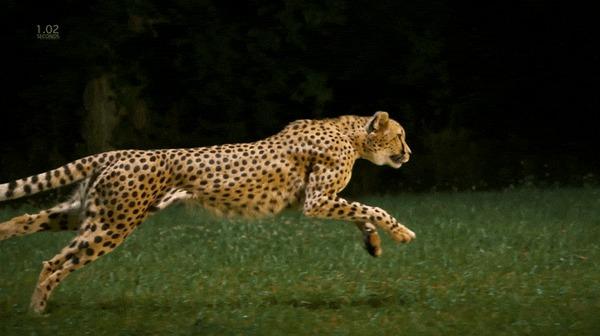 Идеальная техника бега
