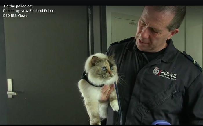 Котик на службе в полиции. Кот, Полиция, Кот на службе, Новая зеландия