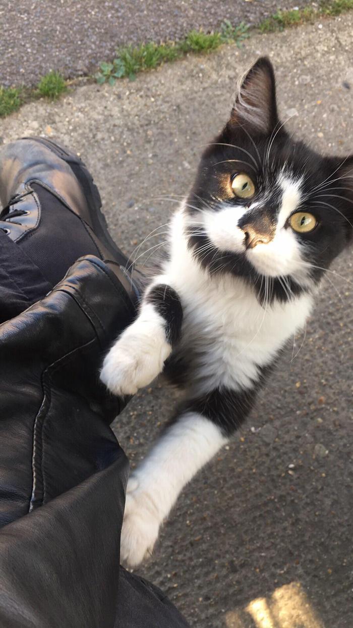 Кошак Знакомства