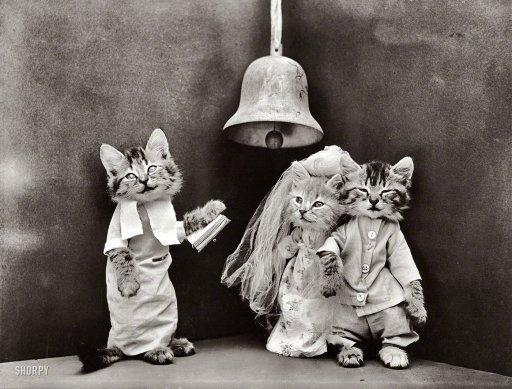 Котик в одежде священника женит котиков, одетых в свадебные костюмы, 1914 год.
