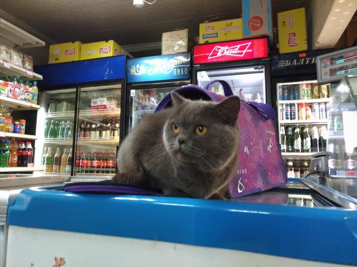 Найдена кошка. Москва. Кожуховская. Кот, Потеряшка, Москва