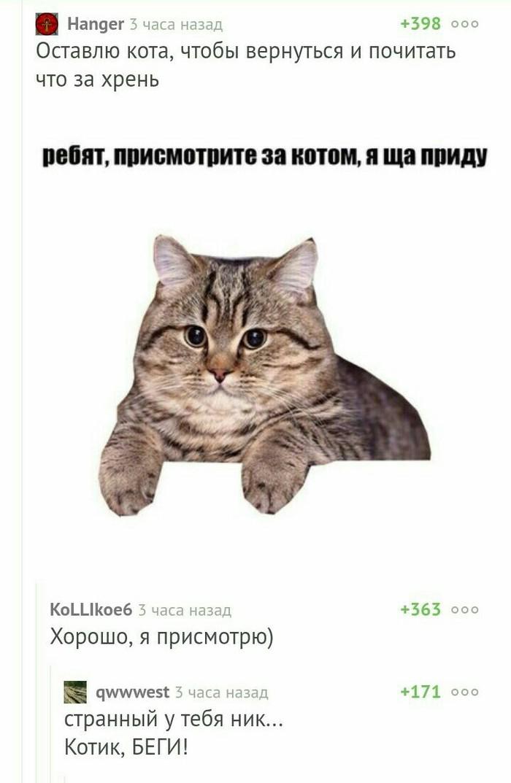 Котик, беги! Клубничкуставить?, Кот, Животноводство