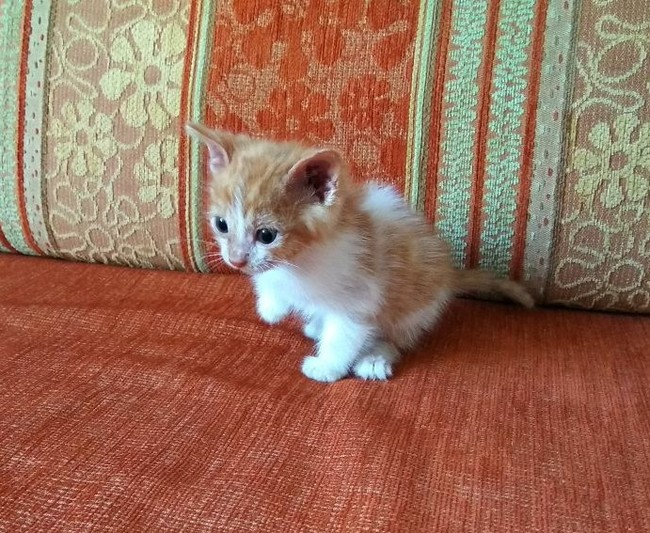 Сила Пикабу, надежда на тебя! [Хозяева найдены, котёнок отдан] Кот, Помощь животным, Длиннопост, В добрые руки