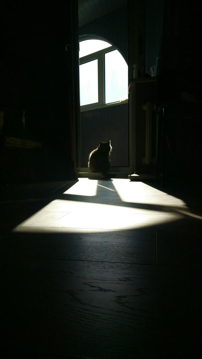 Солнце подарило мне кота