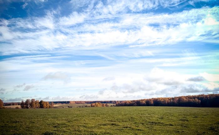 В лес за грибами. Осень, Лес, Россия, Грибы, Картинки, Длиннопост