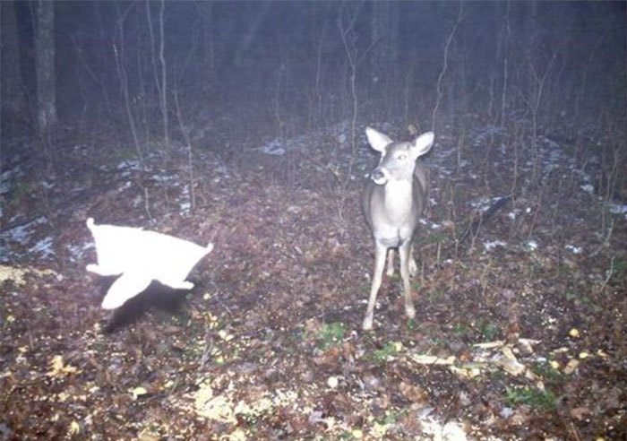 Фото с фотоловушек фотография, лес, Животные, длиннопост