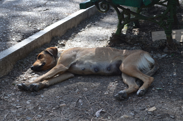 Севастополь усыпить собаку