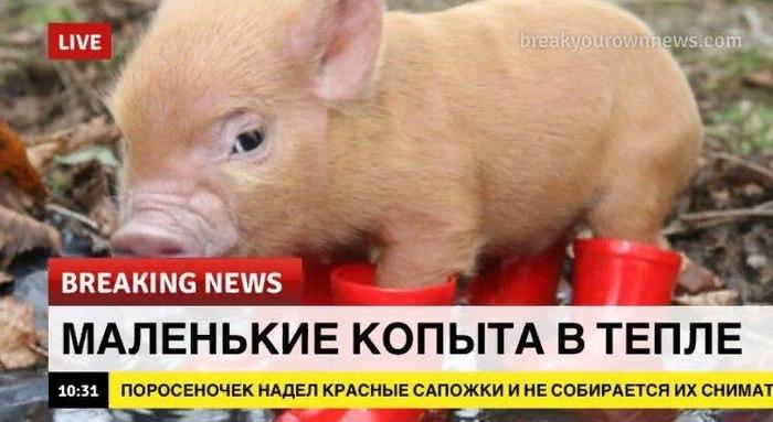 Срочная новость