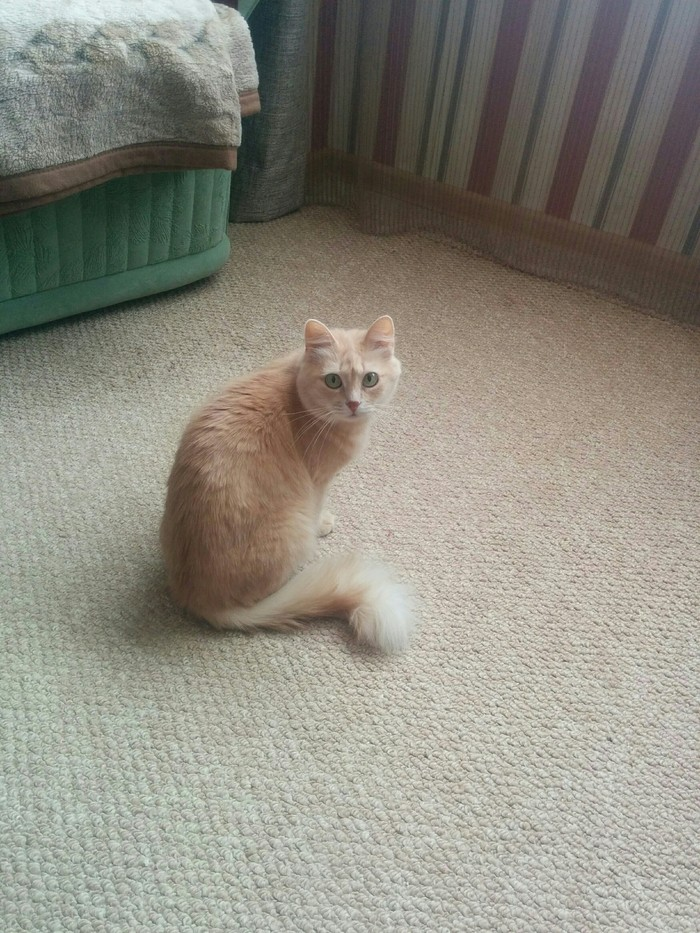 Старушка Кот, Фото на тапок, Моё, Длиннопост