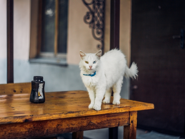 Новороссийские котики Кот, Новороссийск, Мануальная оптика, Гелиос 77м-4