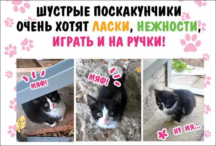 3 котёныша в добрые руки! (Москва, Восточный округ)