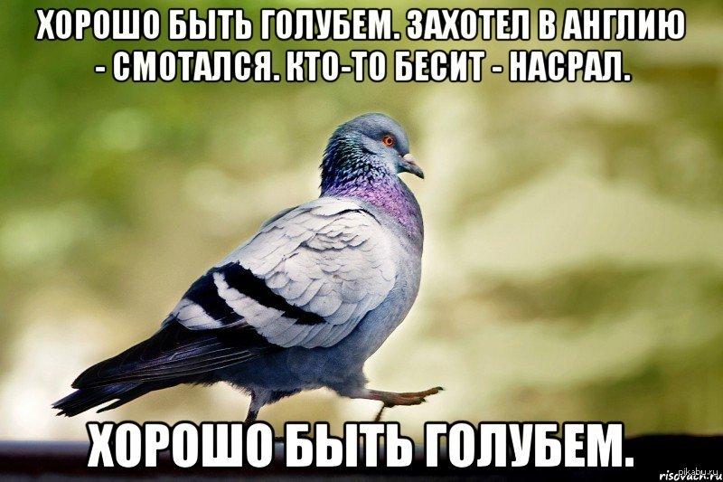 прикол голубь доносчик картинка фотосъемки