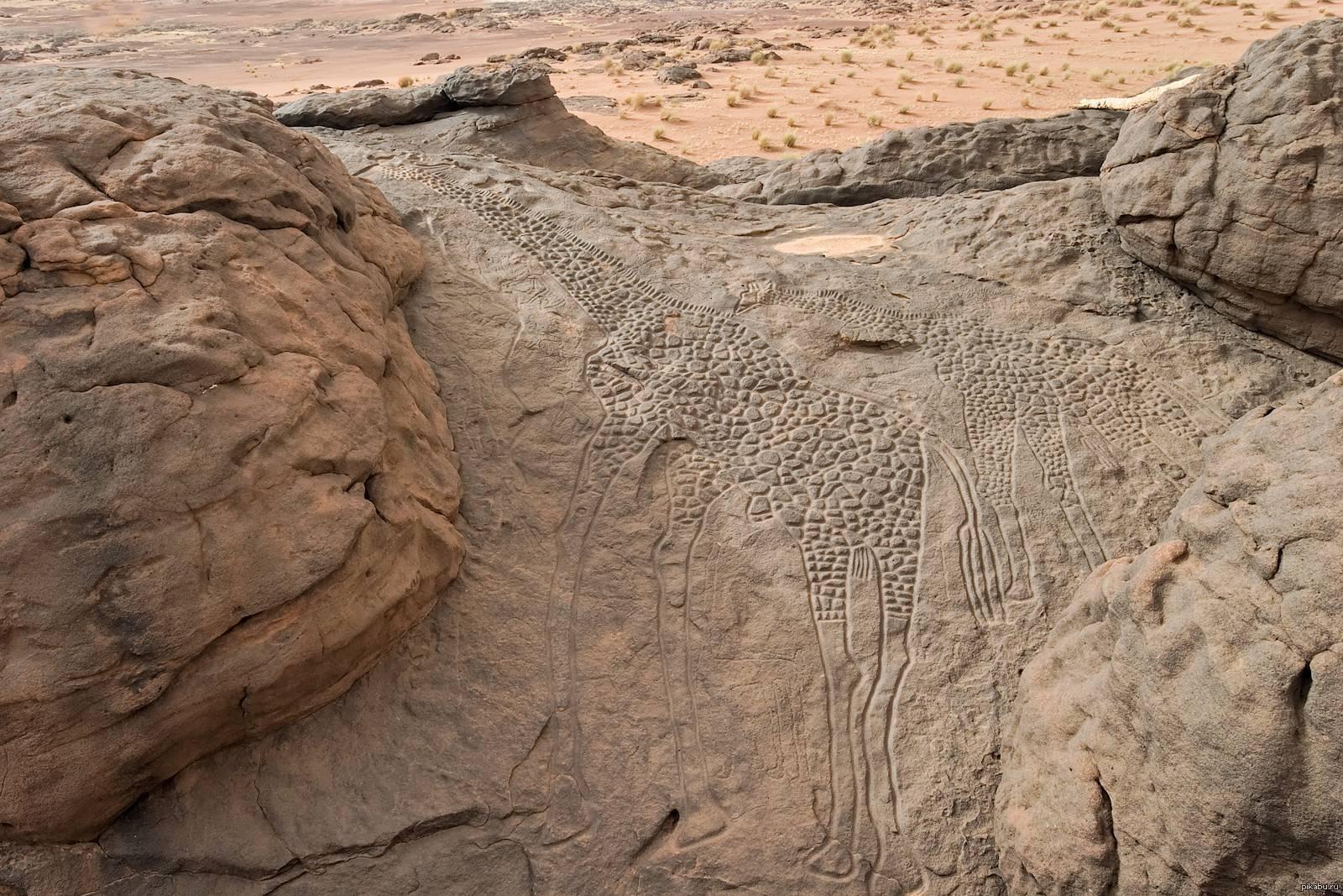the worlds largest rock art petroglyph dabous giraffe - HD1600×1067