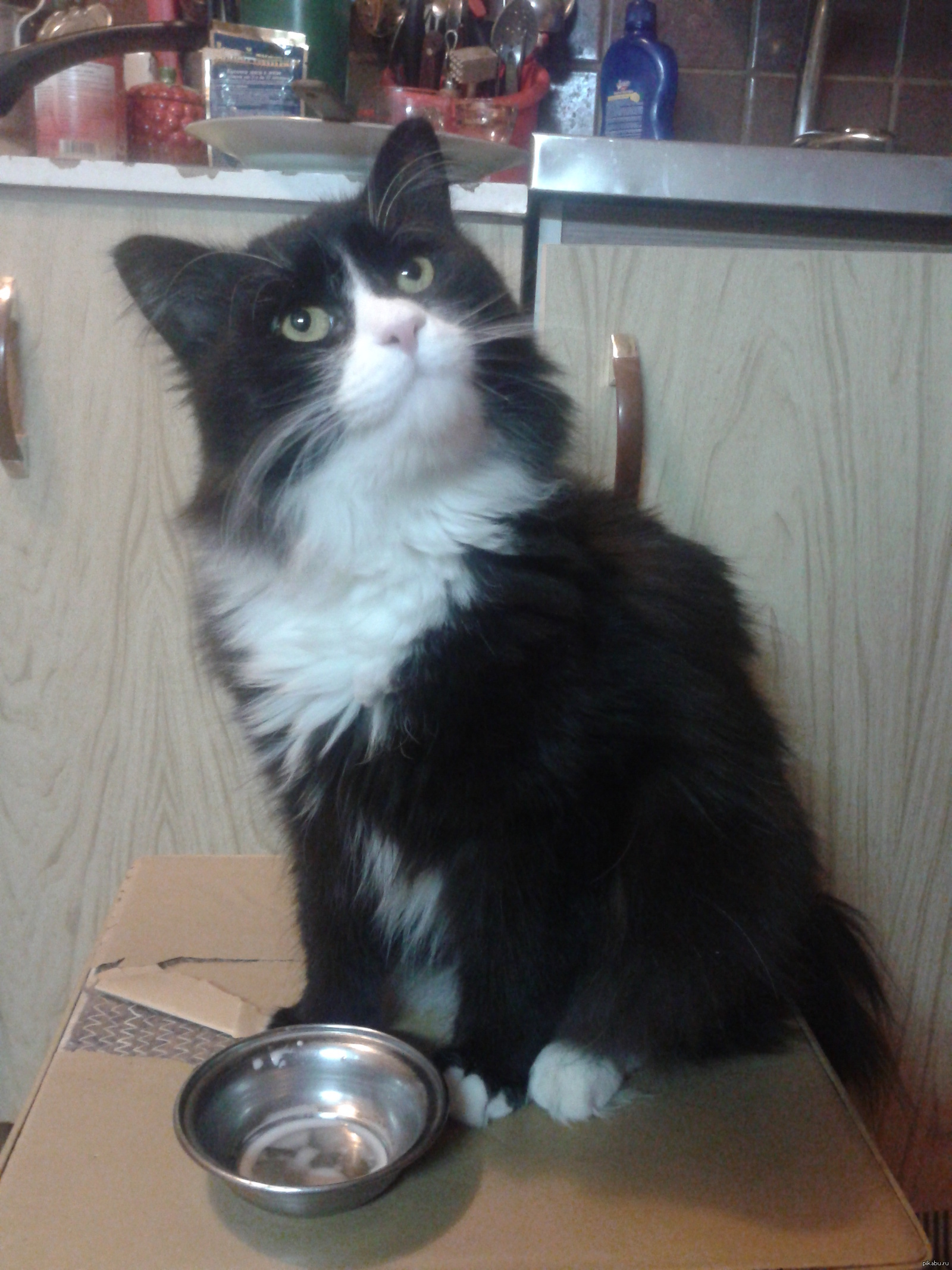 Кот срет когда я ем