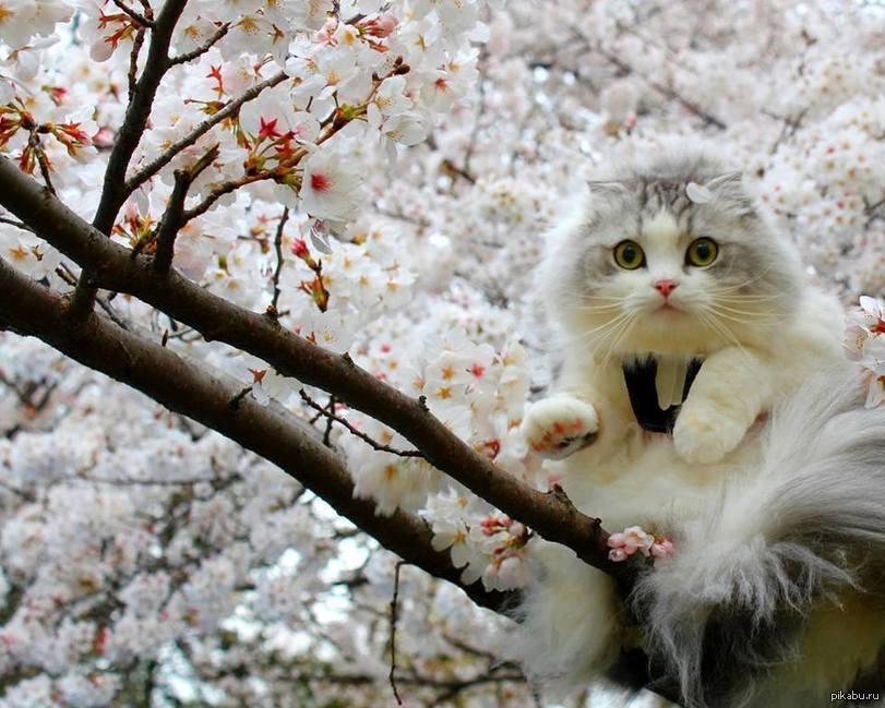 Картинки весны и котиков