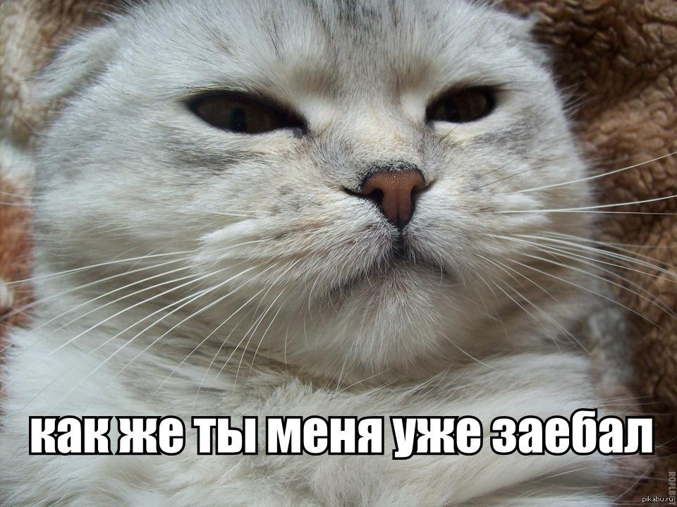 надеть коты с матом мемы праздничные