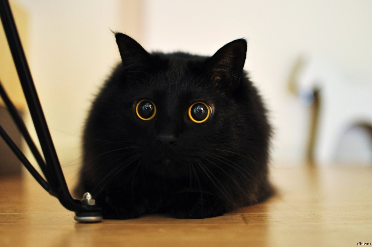 Черные коты прикольные картинки, ночи марго