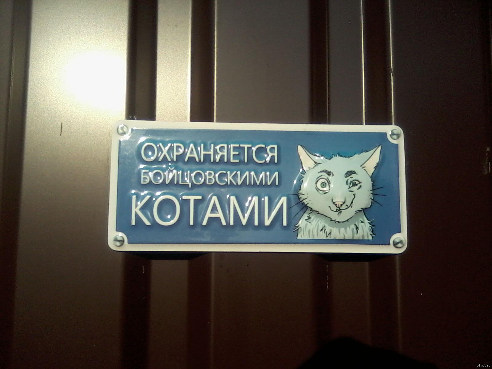 Картинка кот охранник