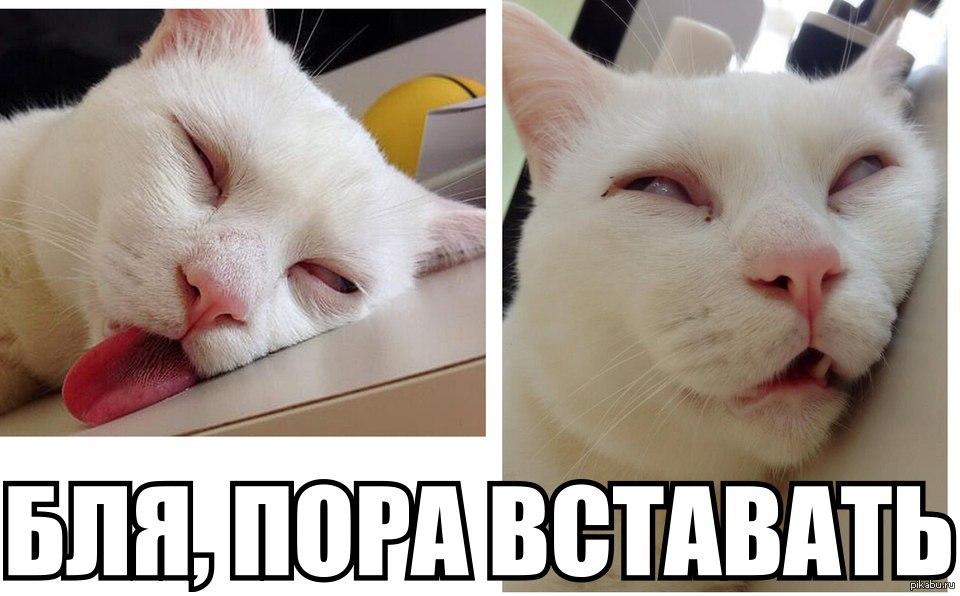чаще различные картинки хватит спать уже утро договоримся встрече