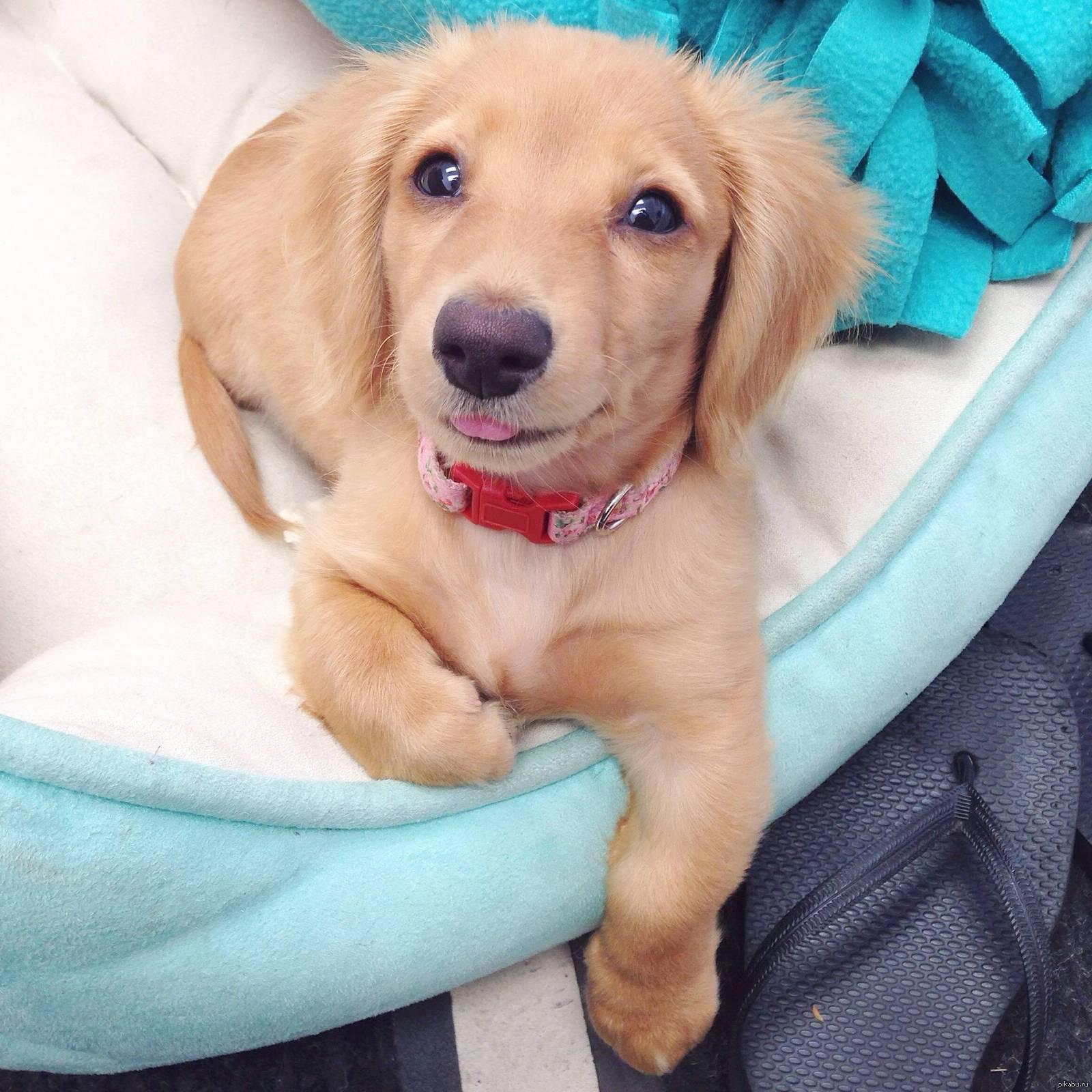 Хочу щенка картинки