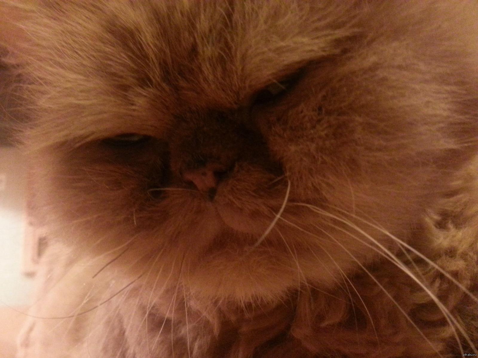Картинка подозревающий кот