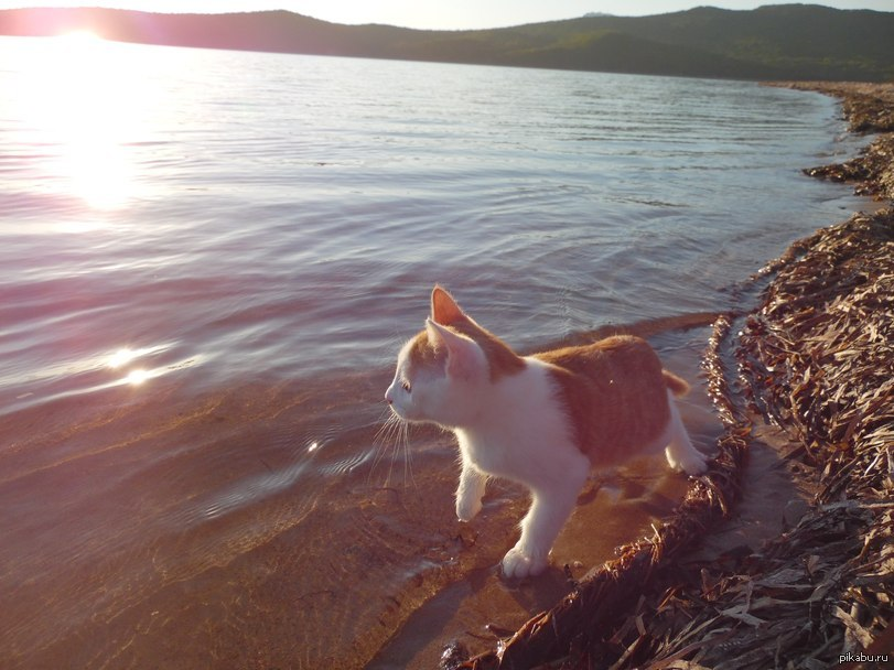 может показаться картинки котята в море той простой