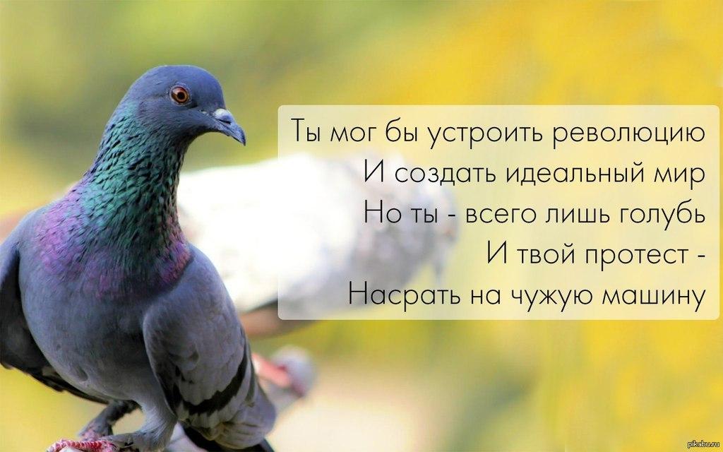 Картинок поздравлениями, смешные картинки про голубя