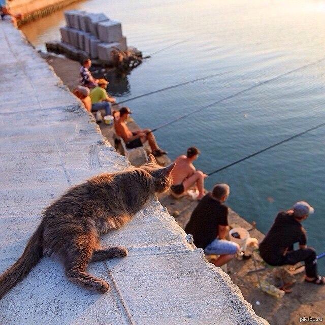 Прикольная картинка коты на рыбалке