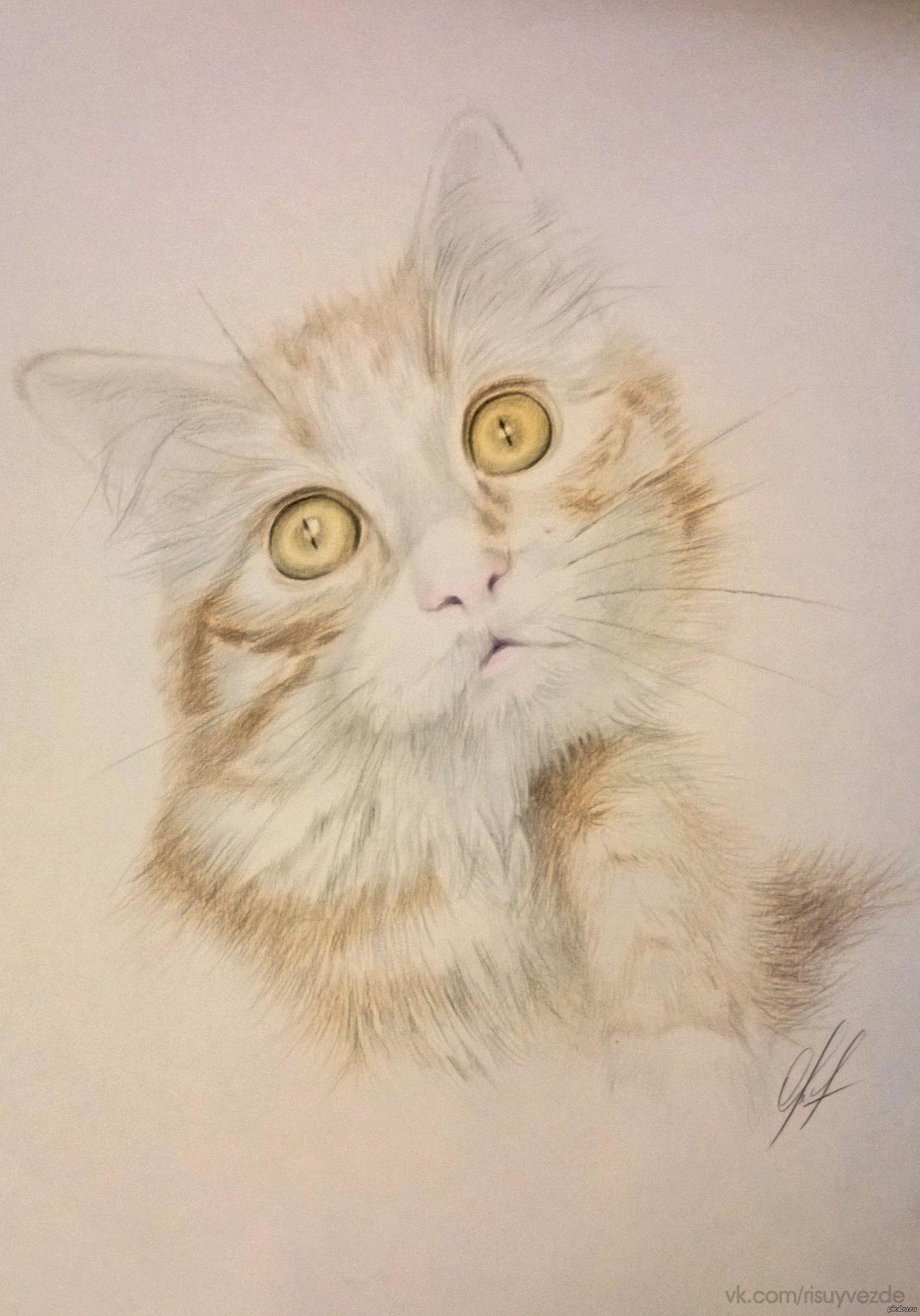 Рисунки кота цветными карандашами