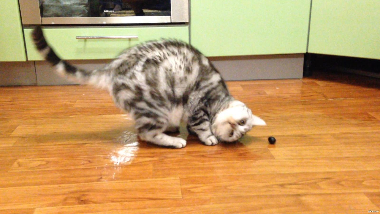 От чего дуреют коты