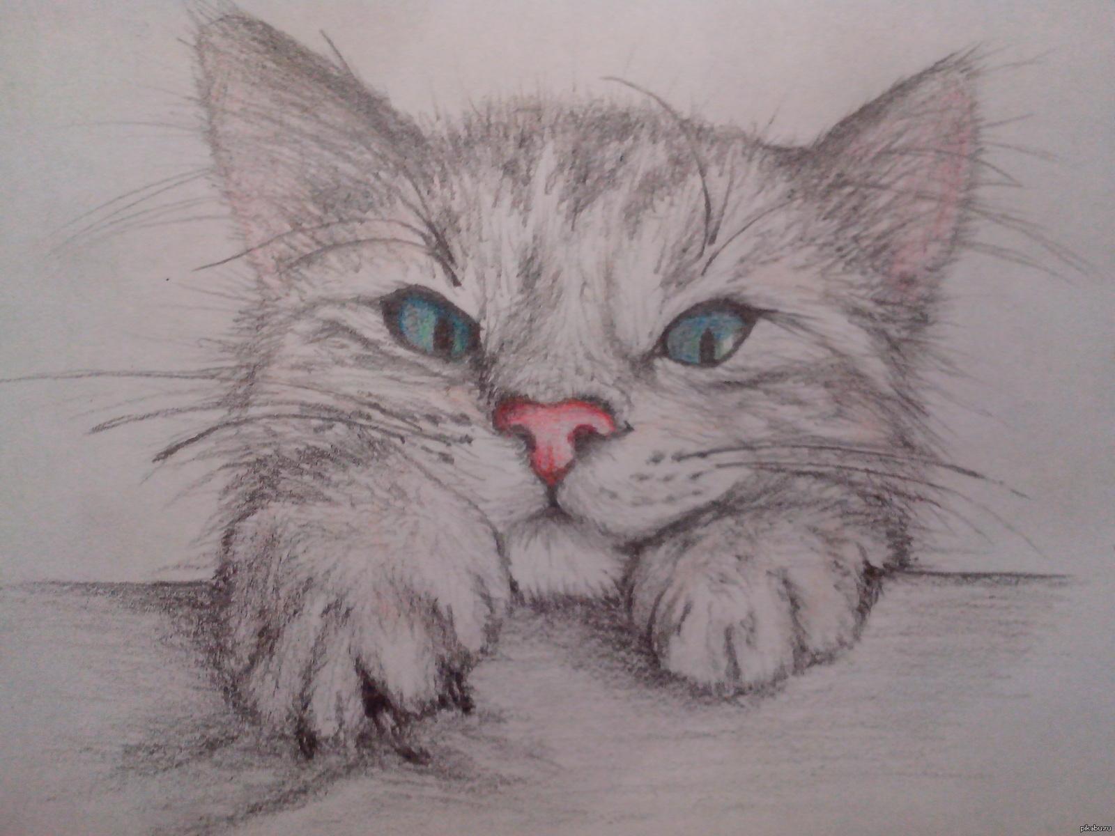 выросла котята картинки рисовать карандашом нашем веломагазине лучшие