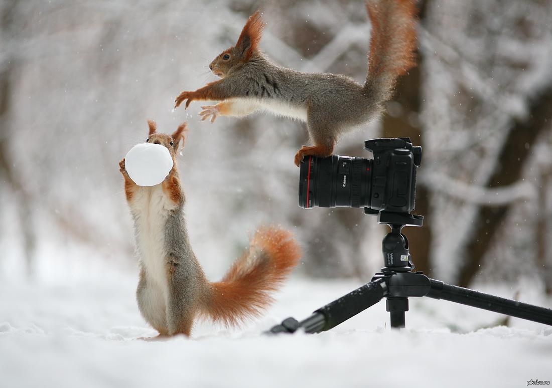 Именем гульшат, смешные картинки про зима