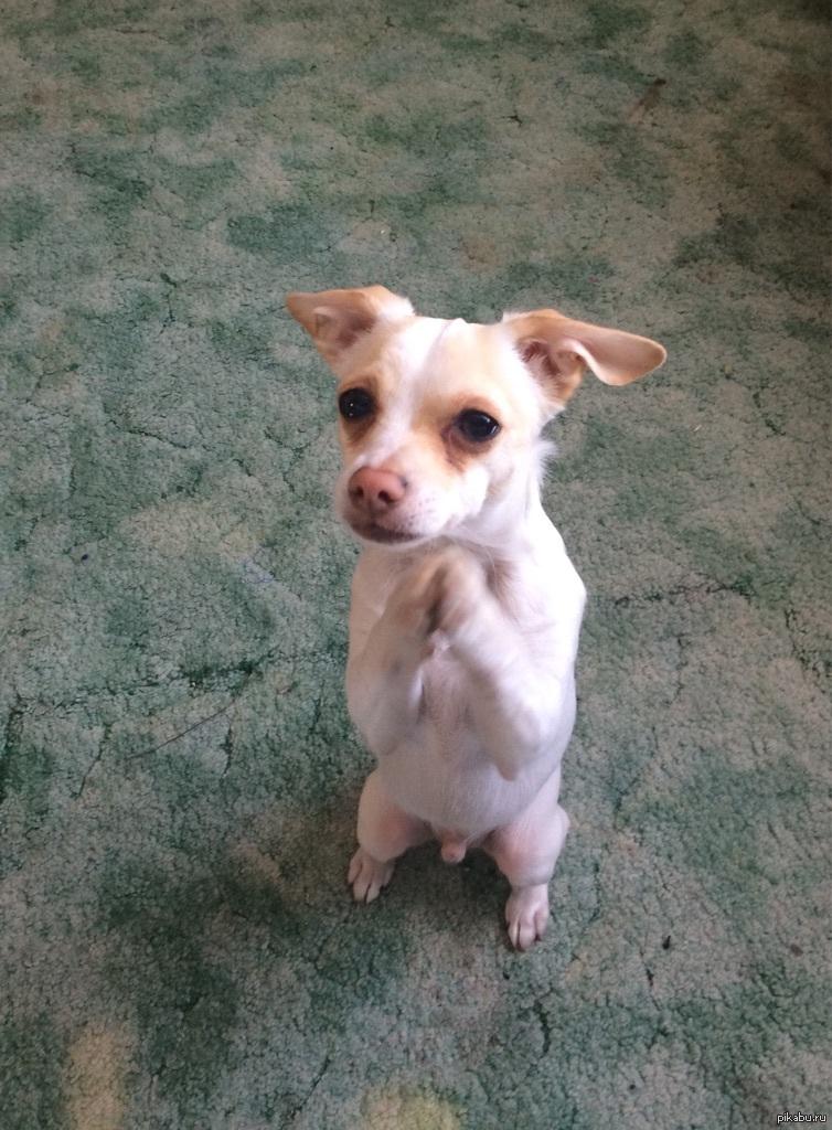 москве наглядно картинка собачка просит прощения путевки доступна