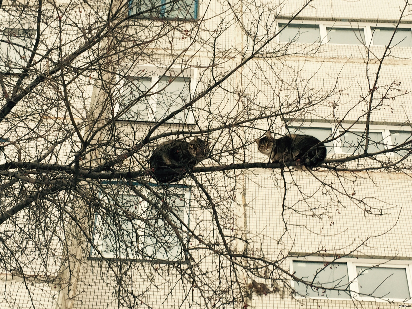 Самые пушистые котята в мире фото ящику отведена