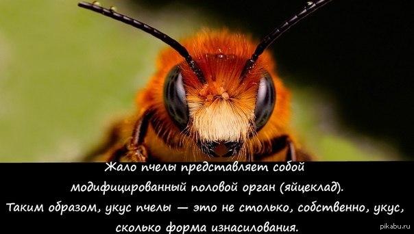 Пчелы секс