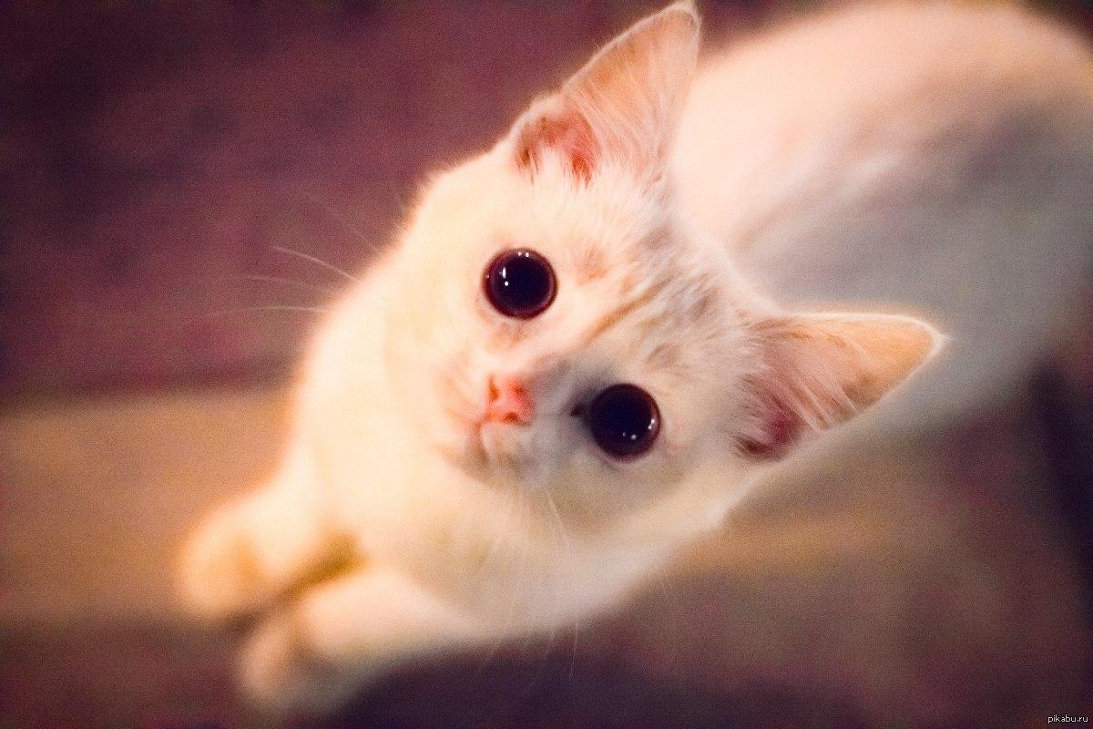 сможете мимимишные котята картинки все